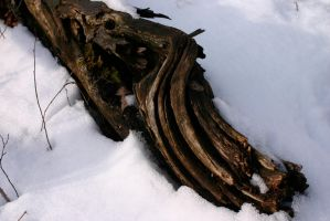 Log in the snow by nwalter