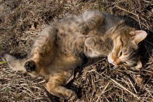 Camouflage cat by T4Del
