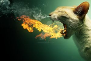 Flaming Cat by 24DesignGFX