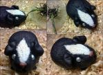 Guinea Pig Black by krikdushi