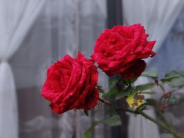 Roses at the Window by Avril000Carolina