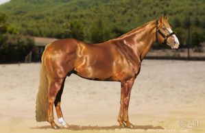 Kid It's Inferno -the magnificent quarter stallion by Haituva