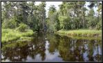 Reflections in the Bayou by SalemCat