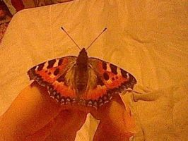 Red Admiral Butterfly on My Hand by BlackRoseLegend