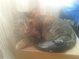 My Cat is a Gamer! by FelicityKendal