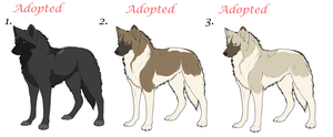 Realistic wolf Adoptables 002 by AimiTheSeawolf