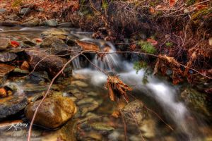 HDR Spring Stream 2 by Nebey