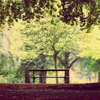 The Bench by Destroth