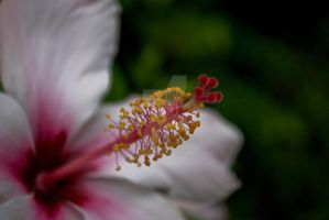 Close up flower by jamescut
