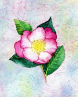 Camellia by Annica22