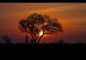 golden sun of afrika by Lisa-M-T