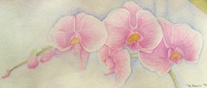 Orchids by petrop92