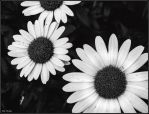 Sombres Fleurs by EveVictus