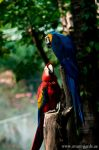 Golden Blue and Red Macaw by NawalAckermann