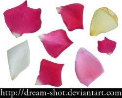 Colorful Rose Petals by dream-shot