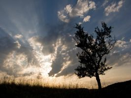 tree and clouds by archaeopteryx-stocks