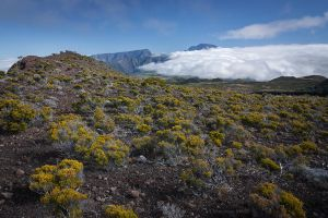 Volcanic vegetation by dominique-merot