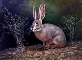 Riverine Rabbit by WillemSvdMerwe