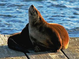 otter basking in the sun by Glacierman54