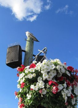 seagull and flowers by renzukuken