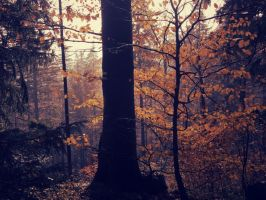 Forest in fire and gold II by Topielica666