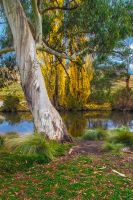 The River Gum by MarkLucey