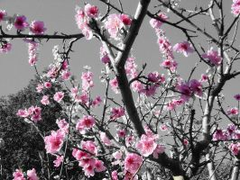 Peach Blossoms by SoulCatcher06