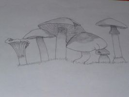 mushrooms by oddkh1