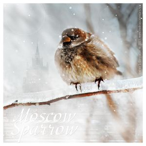 Moscow Sparrow by inObrAS