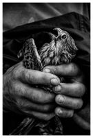 Rescue mission by xbastex