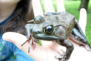 A Frog In The Hand... by hobfrog07