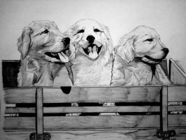 Golden Retriever Puppies by Ashlee41988