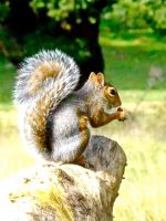 squirrel by TomBydand