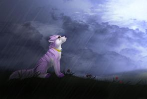 When it's pouring down by LiaBorderCollie