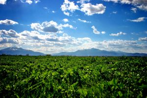 Home by fleka