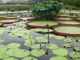 Water Lily Garden by PeriwinklePaisley