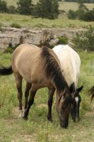 Wild Horses 2 by celtic-stock