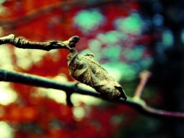 Cocoon by iAmoret