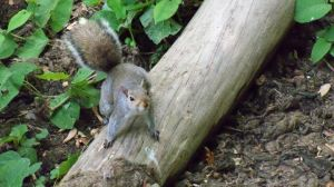 squirrel photo 2 by crazydeadbunny