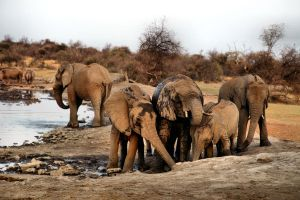 The Joy of the Elephants by WhiteBook