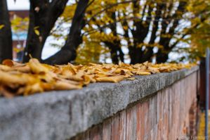 Leaves on fence wall by AndreaMetallurgico