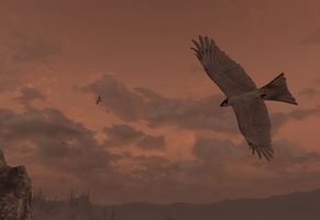 Seabirds of Solstheim by MotPArt