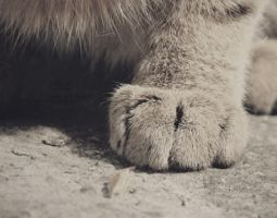 Cat foot by Delicatte