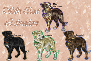 Silk Coat Labradors (Re-colours + premades!) by AnimalArtKingdom