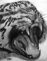 my 1st tiger drawing by Christa-S-Nelson