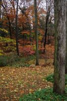 fall 09 by bewing