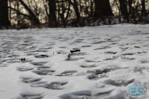 Snow Prints in Ashes of Snow by BCMmultimedia