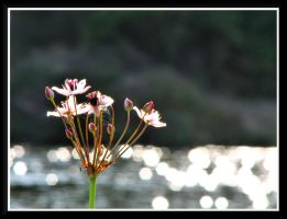 Some flower at river... by Yancis