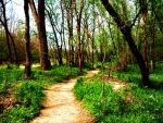 Trail in Spring by Duffy01