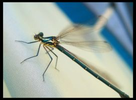 Dragonfly. by PestilentialCreature